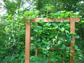 Trellis with copper paint
